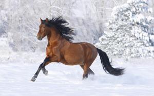winterpferd